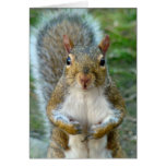 Sweet Squirrel Face (vertical) Greeting Card