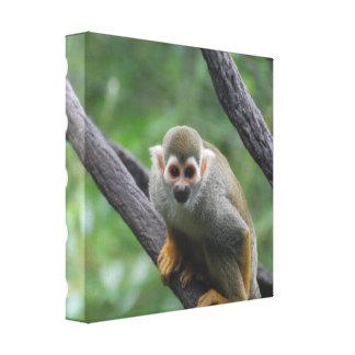 Sweet Squirrel Monkey Canvas Print