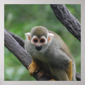 Sweet Squirrel Monkey Print