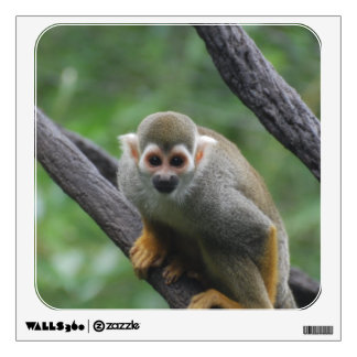 Sweet Squirrel Monkey Room Decals