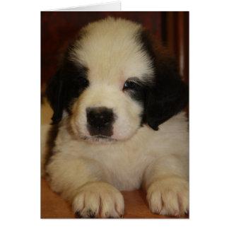 Sweet St. Bernard Puppy Card
