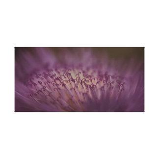 Sweet Sultan Flower Canvas Print