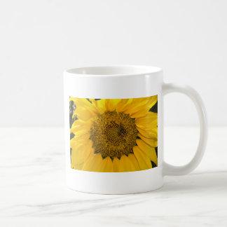 Sweet Sun Mugs