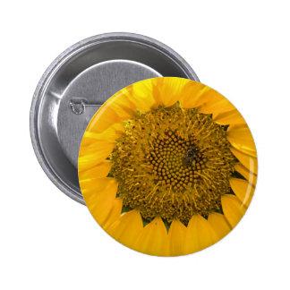 Sweet Sun Pinback Buttons