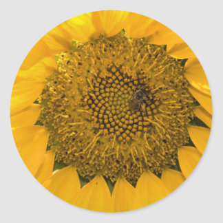 Sweet Sun Stickers
