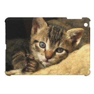 Sweet  Tabby Kitten Resting iPad Mini Case