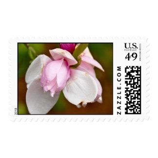 Sweet Thing Stamp