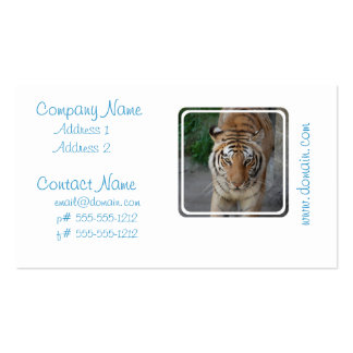 Sweet Tiger Business Card Templates