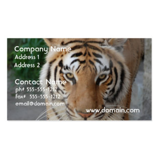 Sweet Tiger Business Card Template