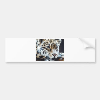 Sweet tiger by Picture kind Car Bumper Sticker