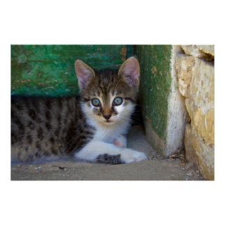 Sweet Tiger Cat Baby Poster