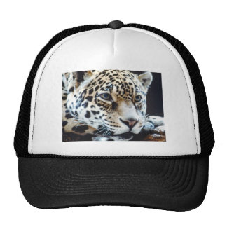 Sweet tigre by Picture Arts Gorros Bordados