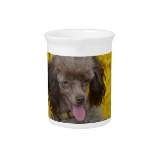 Sweet Tiny Brown Poodle Beverage Pitcher