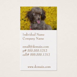 Sweet Tiny Brown Poodle Business Card