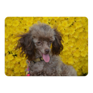 Sweet Tiny Brown Poodle Card