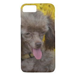 Sweet Tiny Brown Poodle iPhone 8/7 Case