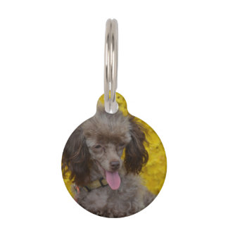 Sweet Tiny Brown Poodle Pet ID Tag