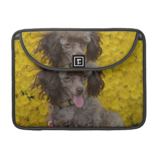 Sweet Tiny Brown Poodle Sleeve For MacBooks