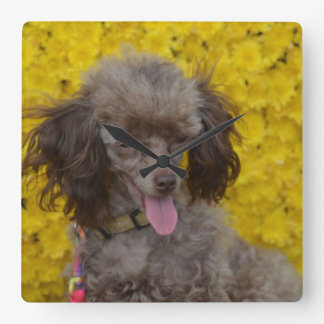 Sweet Tiny Brown Poodle Square Wall Clock