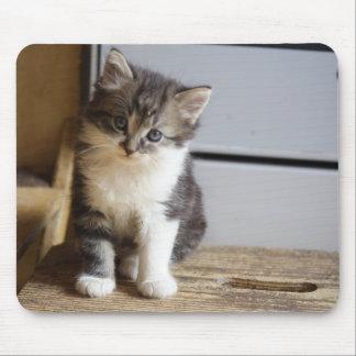 Sweet Tomcat Kitten Mouse Pad