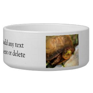 Sweet Turtle Bowl