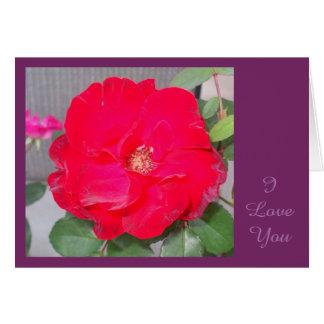SWEET VALENTINE I Love You Greeting Card 2015