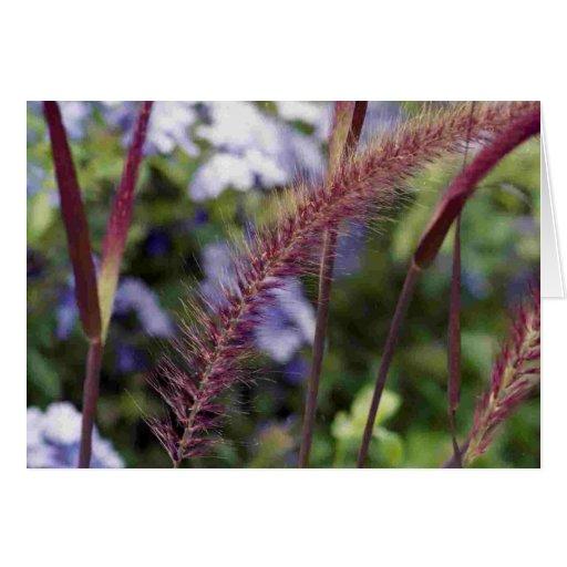 Sweet Vernal Grass Card