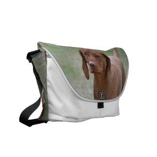 Sweet Vizsla Courier Bag