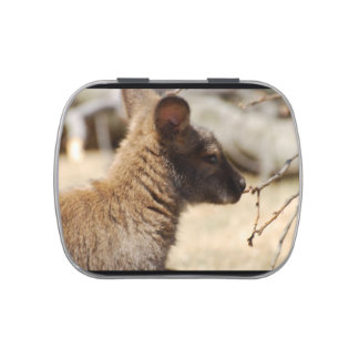 Sweet Wallaby Jelly Belly Candy Tin
