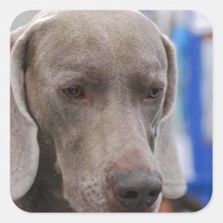 Sweet Weimaraner Dog Stickers
