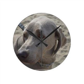 Sweet Weimaraner Round Clock