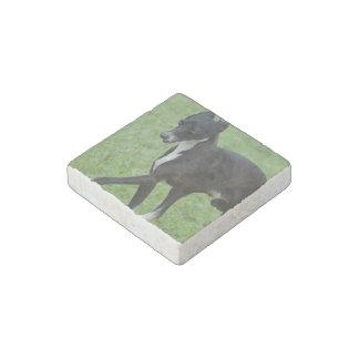 Sweet Whippet Stone Magnet