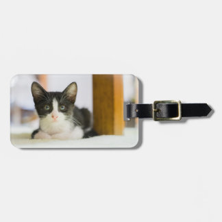 Sweet White And Black Kitten Luggage Tag