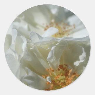 Sweet White Classic Round Sticker