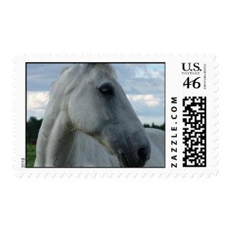 Sweet White Horse Postage