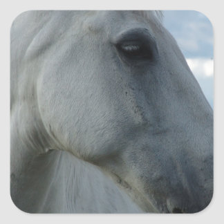 Sweet White Horse Square Sticker
