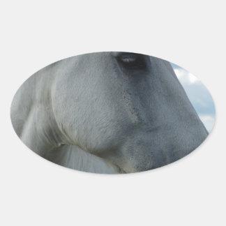 Sweet White Horse Oval Sticker