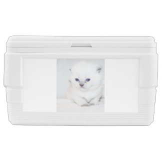 Sweet white Kitten Chest Cooler