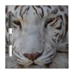 Sweet White Tiger Dry Erase Board