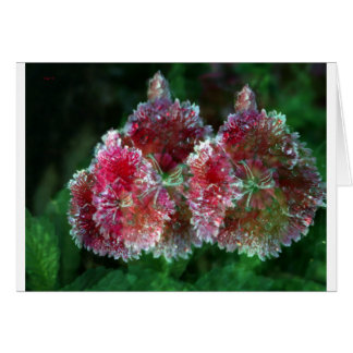Sweet William Carnation Card