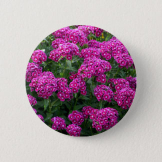 Sweet William in Bold Bloom Button