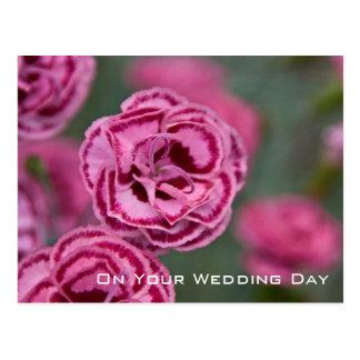 Sweet William | Wedding Congratulation Postcard