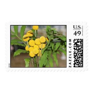 Sweet Yellow Flowers Postage