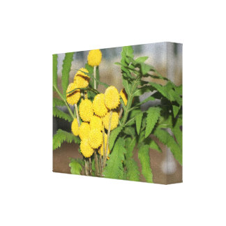 Sweet Yellow Flowers Print Stretched Canvas Print