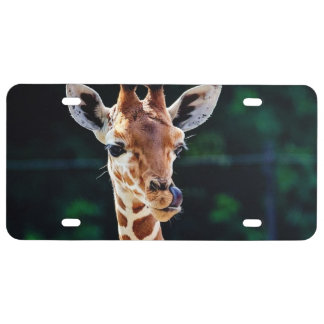 sweet young giraffe license plate