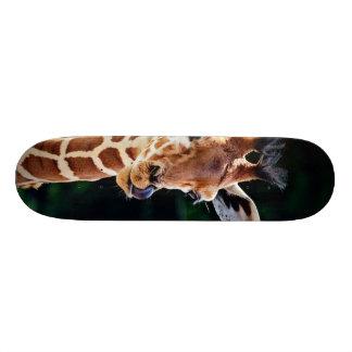 sweet young giraffe skateboard deck