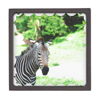 Sweet Zebra Box Premium Trinket Boxes