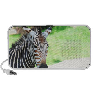 Sweet Zebra Speakers