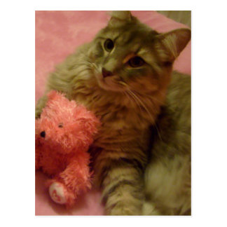 sweetie and his teddy post cards