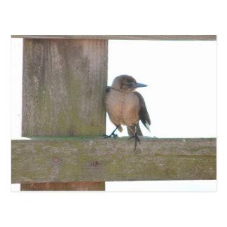 Sweetie Bird Postcard